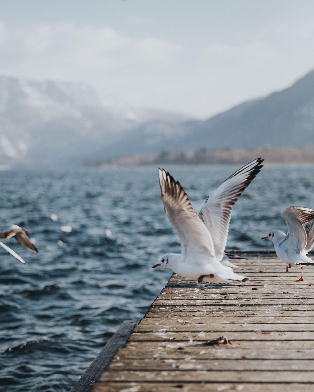 Moon Lake Birds-NZUP-022-00-1