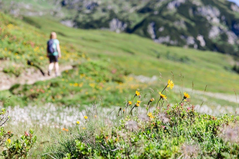 Blumen am Weg zum Draugsteinörl