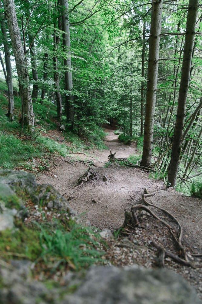 Nockstein Wanderung im Wald