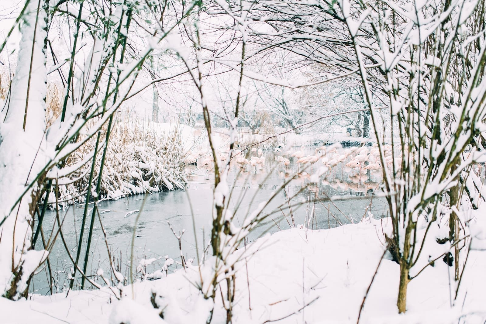 Salzburg bei Schnee