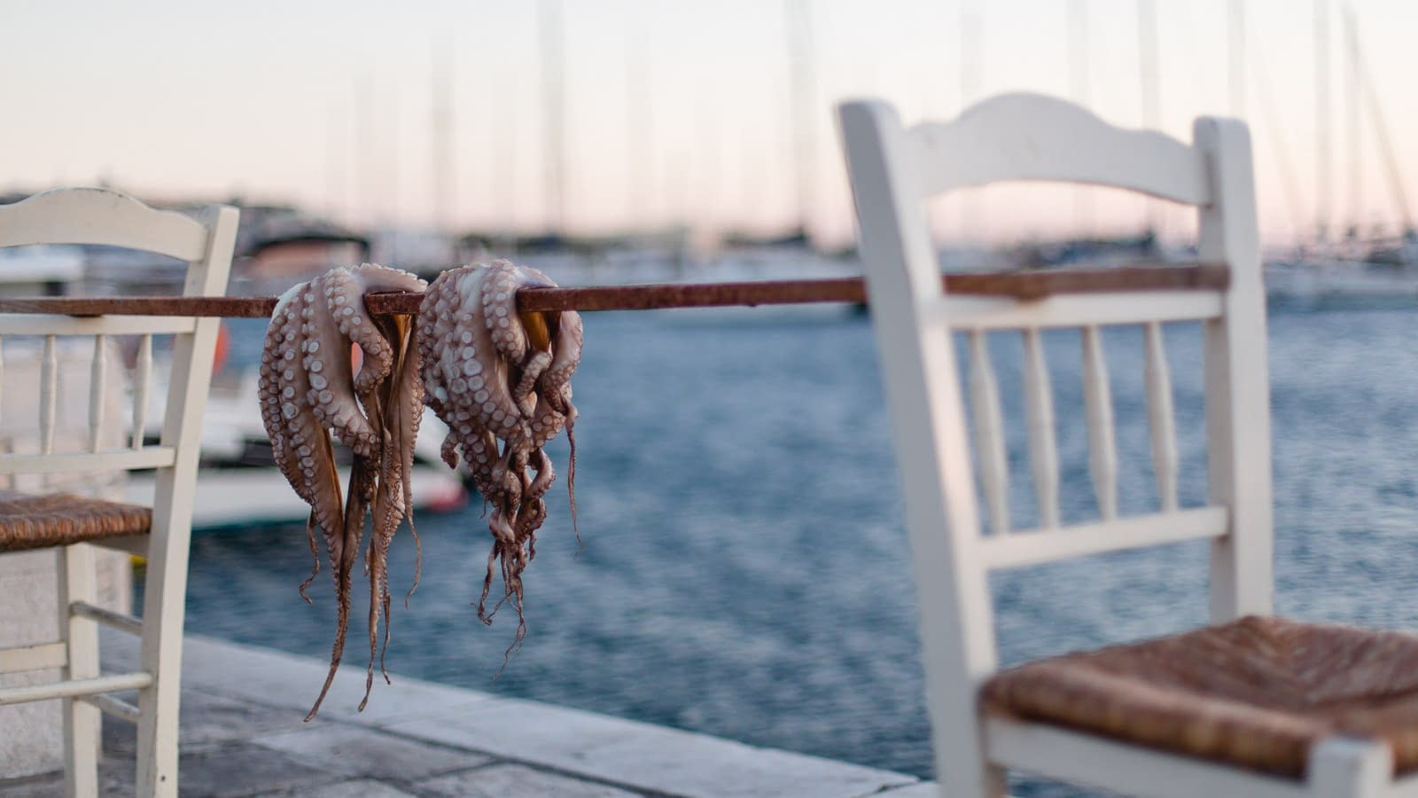 Octopus zum Trocknen