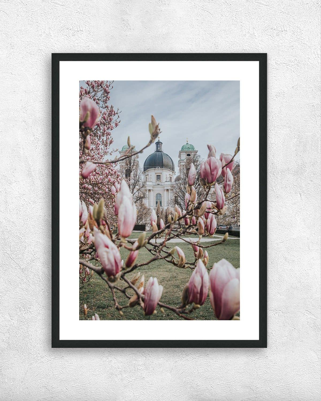Print - Magnolienblüte in Salzburg